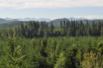 Northwest Biosolids nonprofit ecology
